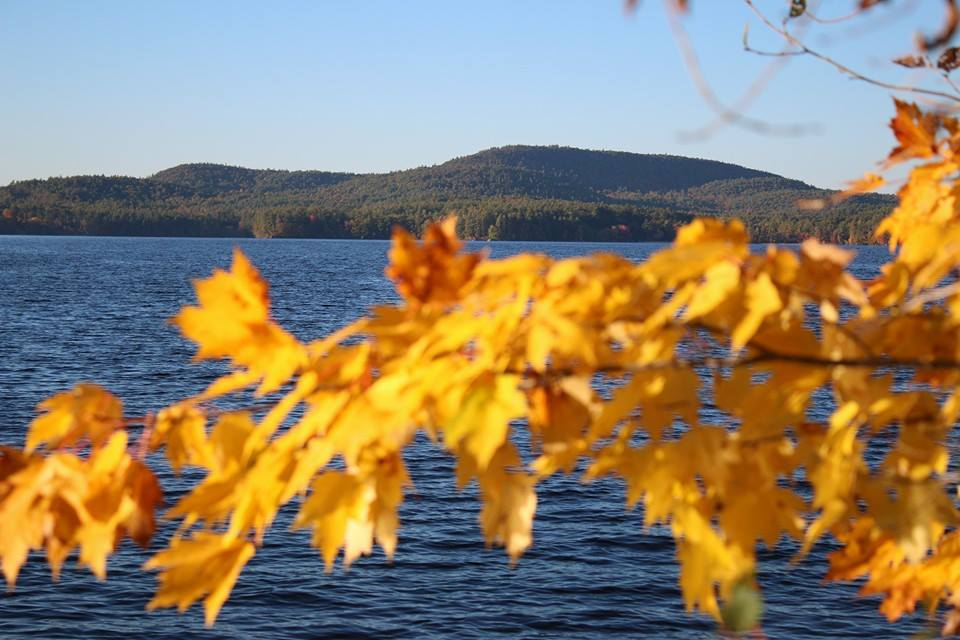 Lakeview from behind maple leaves
